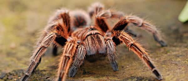 Sonhar com aranha no Jogo do Bicho