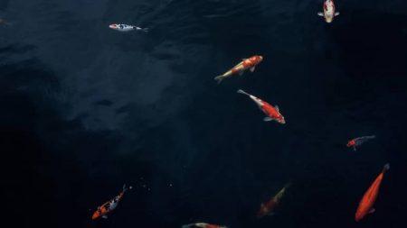 Sonhar com peixe jogo do bicho
