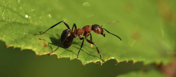 Sonhar com formiga Jogo do Bicho