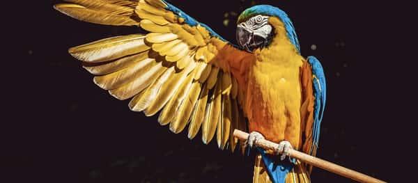 Sonhar com papagaio jogo do bicho