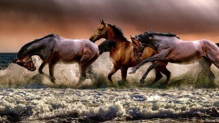 Sonhar com cavalo no Jogo do Bicho