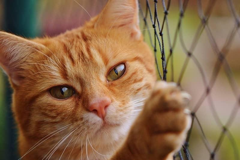 Sonhar matando gato