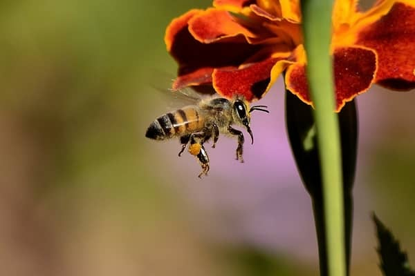 Sonhar com enxame de abelhas voando