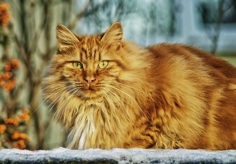 Sonhar com gato no espiritismo