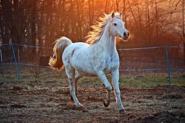 Sonhar com cavalo correndo no espiritismo
