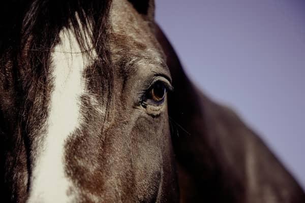 Cavalo no mundo espiritual dos sonhos