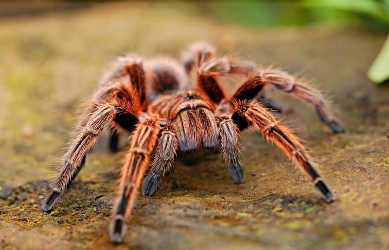 Sonhar com aranha na visão evangélica
