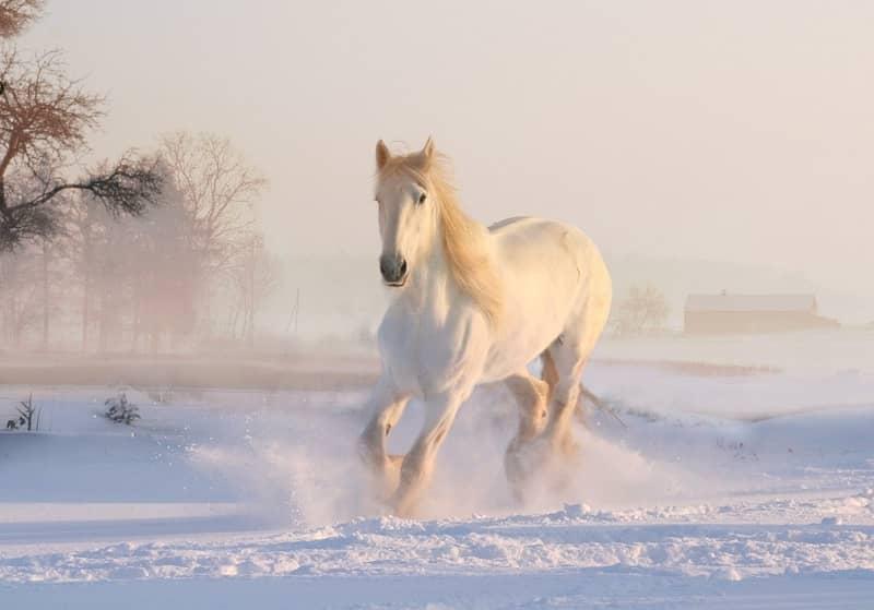 Sonhar com cavalo no espiritismo