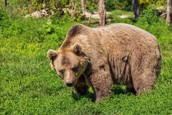 Números da sorte de sonhar com urso