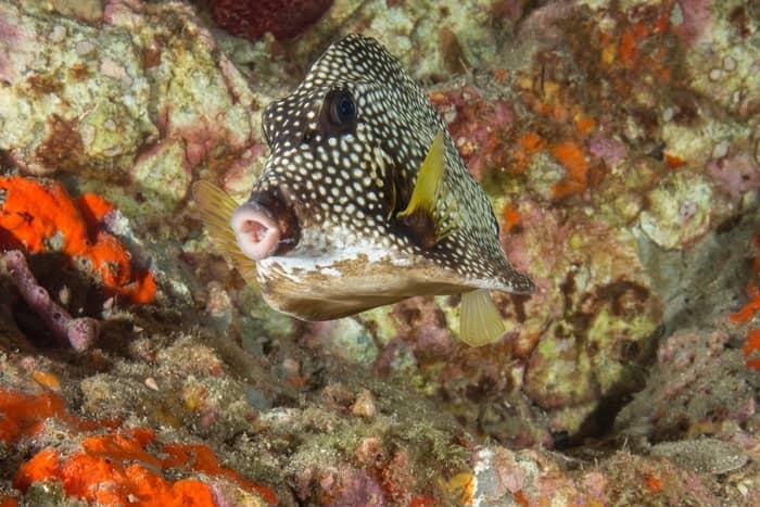 Animal marinho estranho