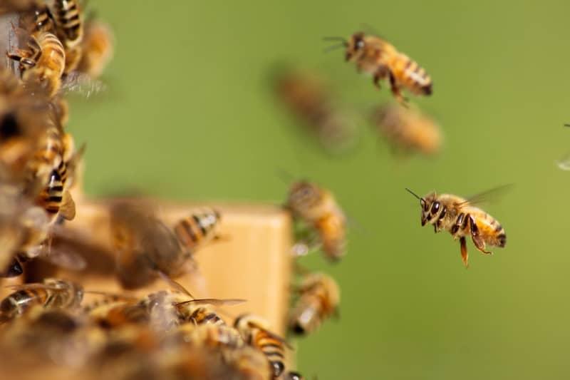 Significado espiritual das abelhas no Jogo