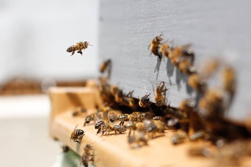 Números da sorte para sonhar com abelha
