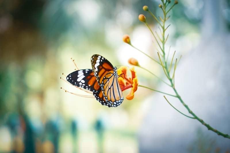 Sonhar com borboleta no Jogo do Bicho