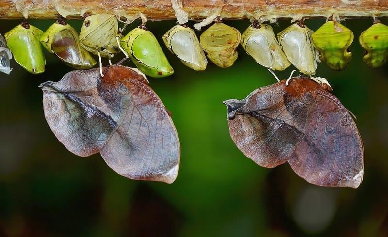 Números da sorte de sonhar com larvas