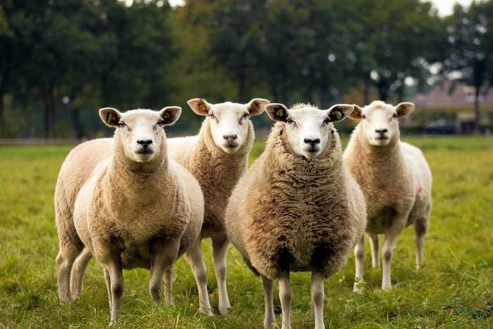 Números da sorte do carneiro