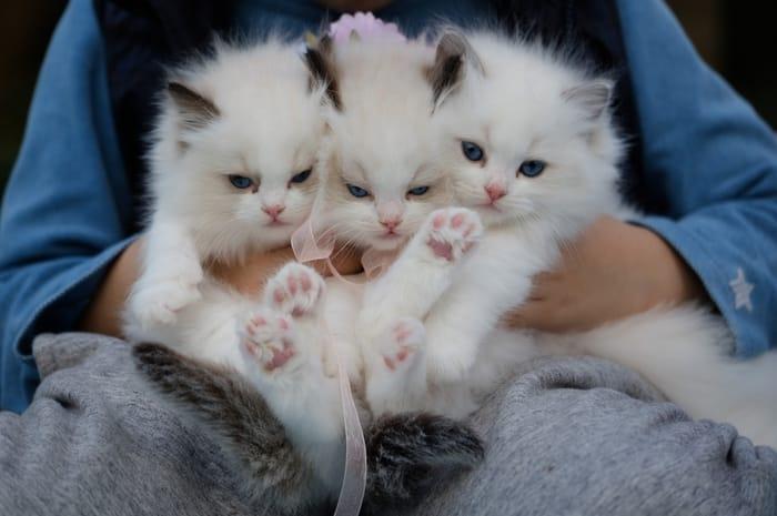 Sonhar com ninhada de gatos