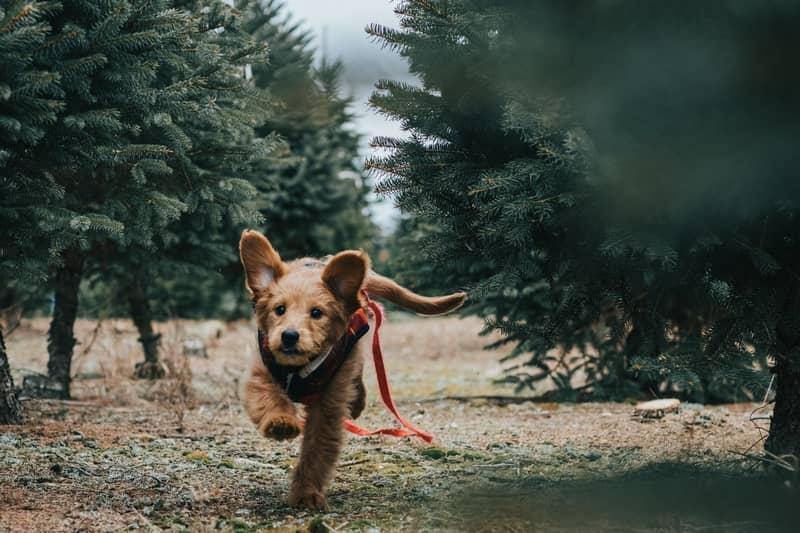 Sonhar com cachorro fugindo